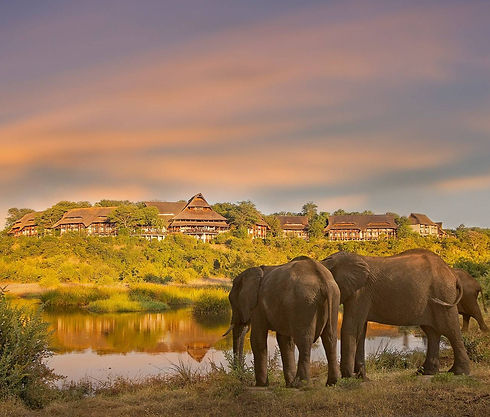 01-victoria_falls_safari_lodge_elephants.jpg_edited.jpg