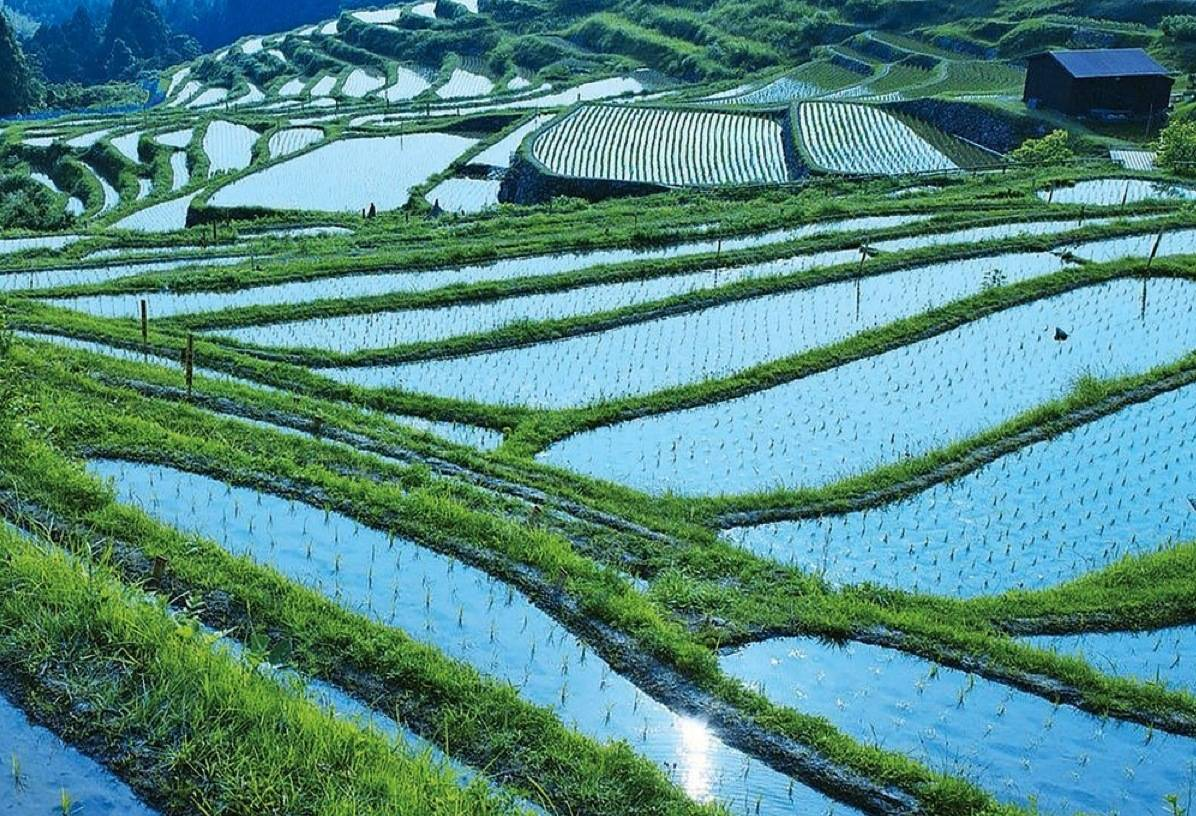 Rice Paddies VISIT JAPAN