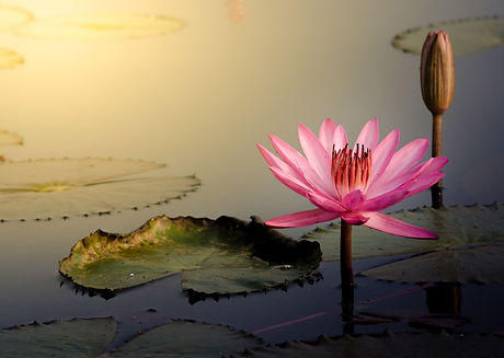 5 water lily-4.jpg