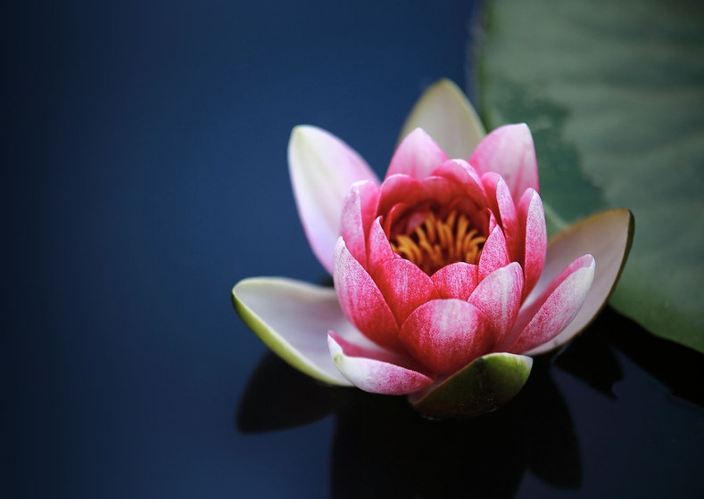 5 water lily.jpg