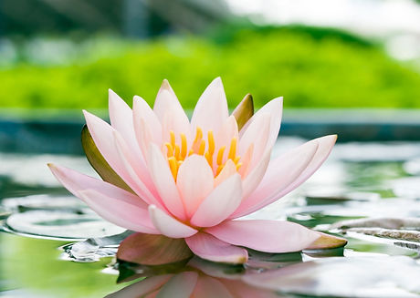 5 water lily-2.jpg