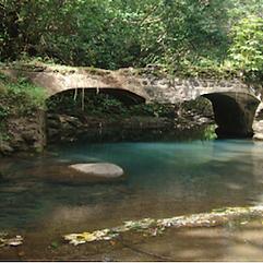 bridge over green waters.png