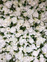 white flower wall.jpg