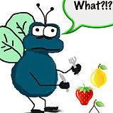Fruit Fly drawing.jpg