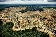 Palm Oil Destruction