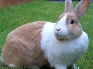 Bunnie the Bunny on the Front Cover of Writers Plot