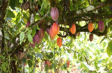 IMMERSE YOURSELF IN THE CULTURE OF COCOA PRODUCING COUNTRIES