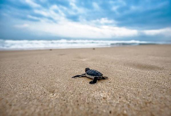 turtle-2201433__340.jpg