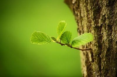 trees-2987303_1280.jpg