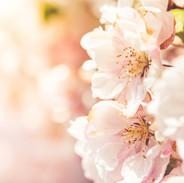 flower-3093433_1920.jpg