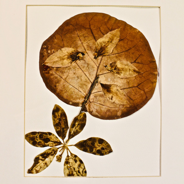 """Leaves on paper, 9"""" x 12""""."""
