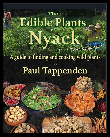 Book Cover 2nd ed.jpeg