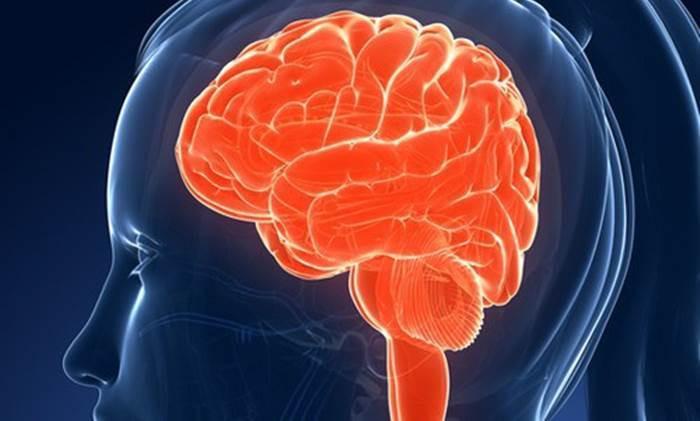 Cerveau-et-mémoire1