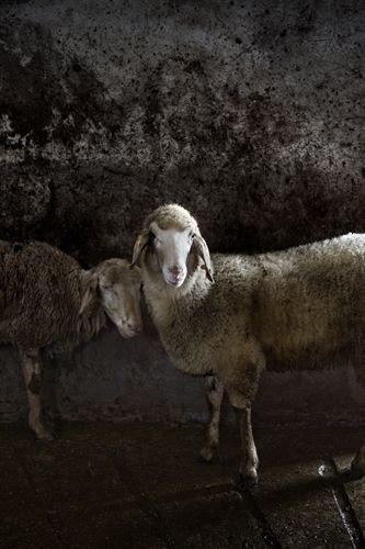 Foto: Tommaso Ausili. Pinterest