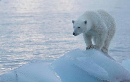 """O """"desaparecimento"""" de gelo polar (e dos ursos polares) tornou-se um garoto-propaganda para os defensores do aquecimento global."""