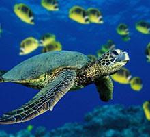 Outras grandes vitórias: salvando nossos oceanos, a internet e a democracia