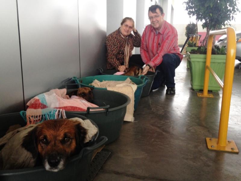 Os cães na companhia dos acolhedores, Lucinha e João Foto: Débora Ely / Agência RBS