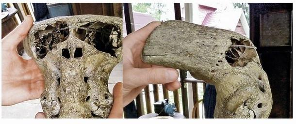 crânios-anômalos-encontrados-na-Rússia