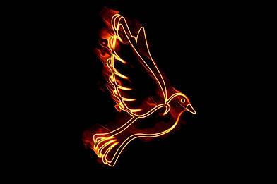 dove-5061950_1280.jpg