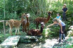 interazione assistita con animali