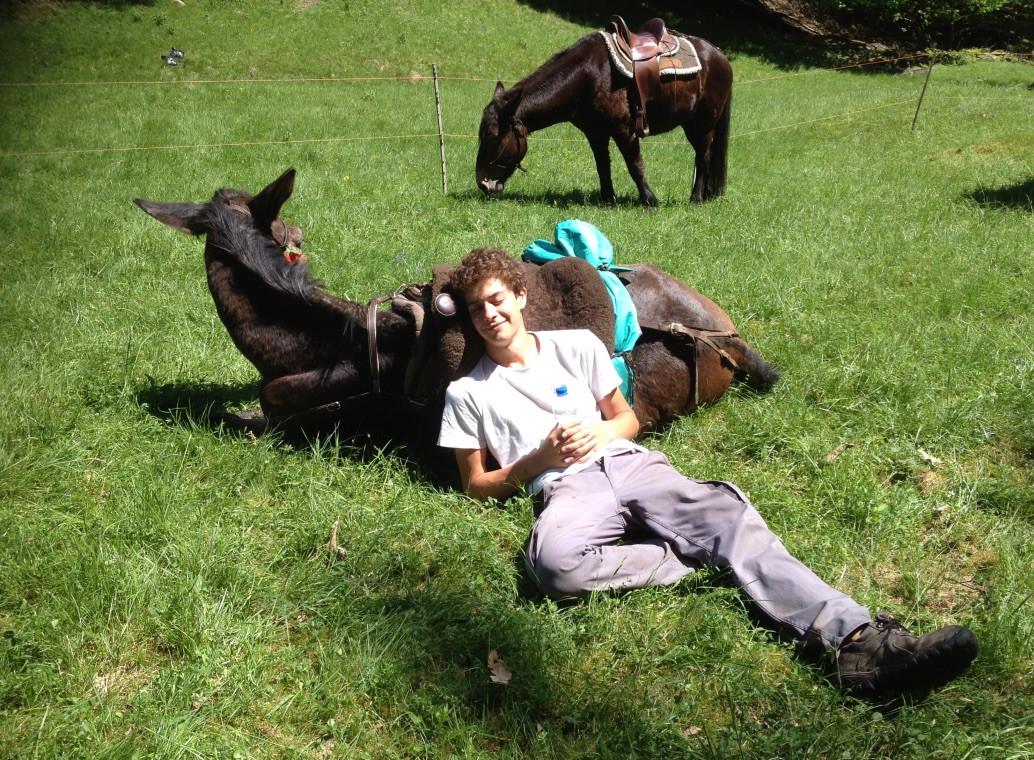 VSOMARELLI Unterwegs mit Tieren