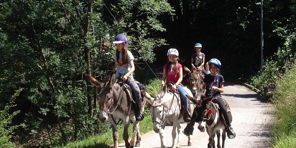 Corso d'equitazione: 4 giorni in sella! > 01.-04.07.2019