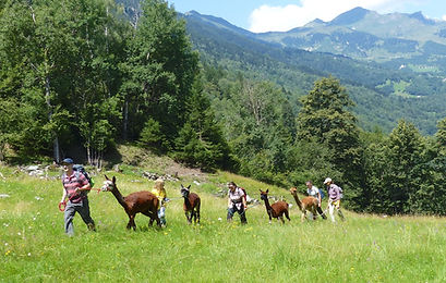SOMARELLLI Trekking con alpaca