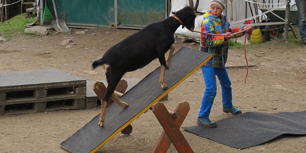 Von und mit Tieren lernen!