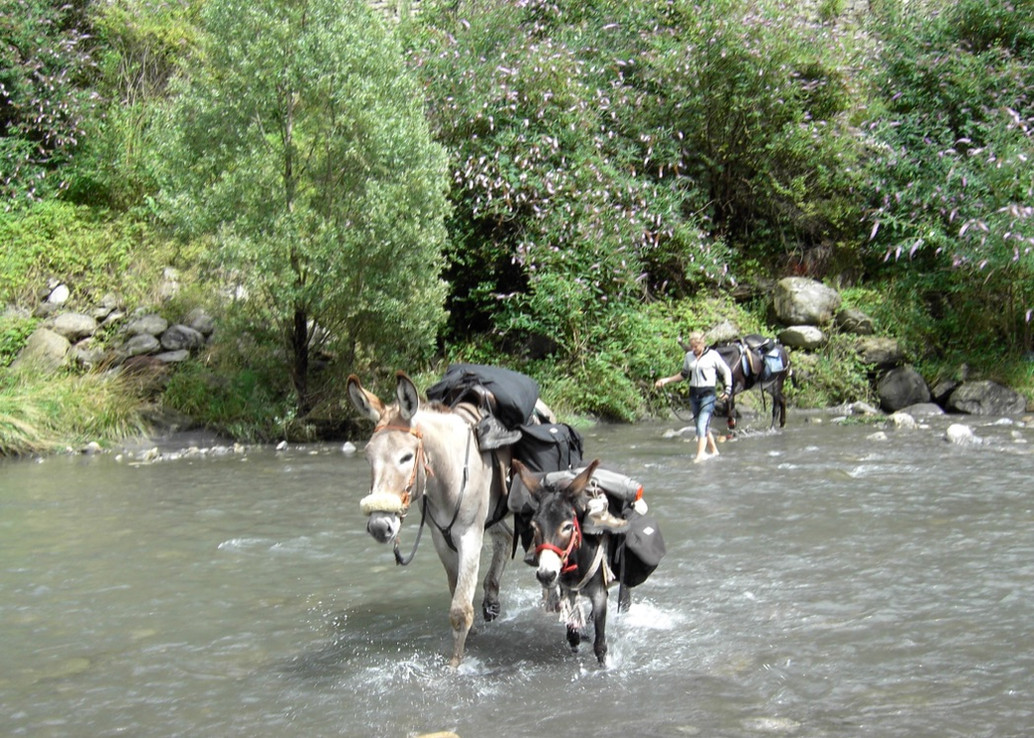 USOMARELLI Unterwegs mit Tieren