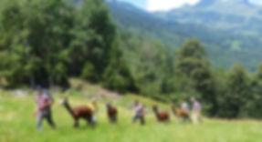 Alpaka-Trekking Trekking mit Alpaka