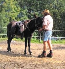 Führungskurse mit Eseln Coaching mit Eseln Training mit Eseln