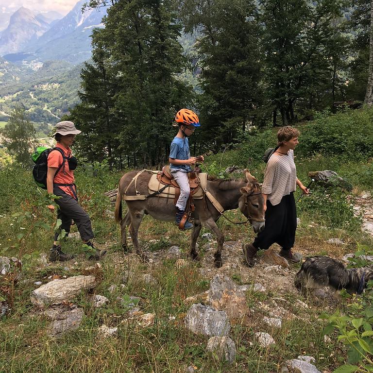 Unterwegs mit Eseln, Mulis oder Alpakas