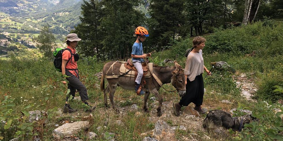 Familientrekking mit Eseln, Mulis oder Alpakas