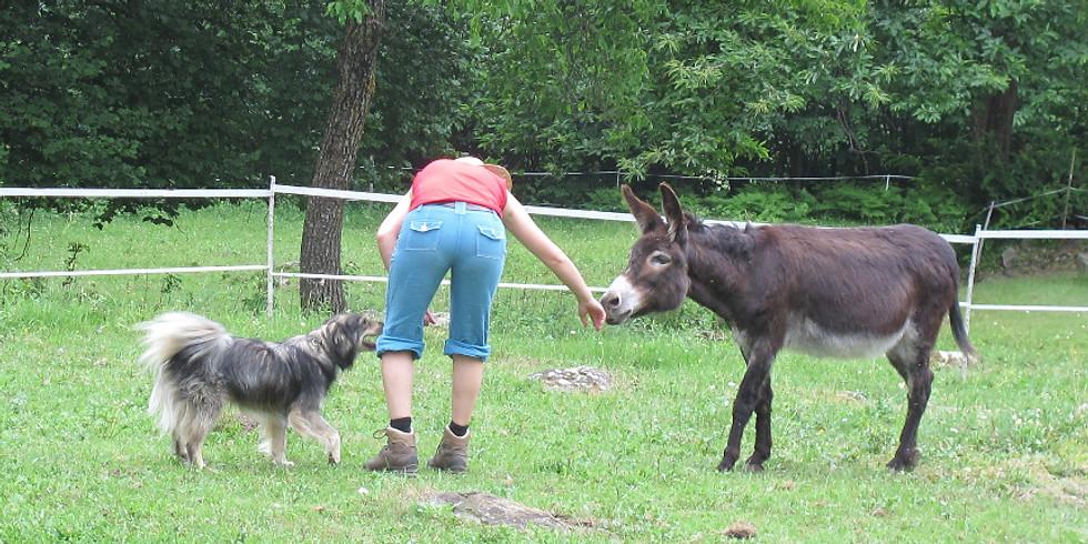 "Kurs ""Mensch-Tier-Interaktion"" Teil2"