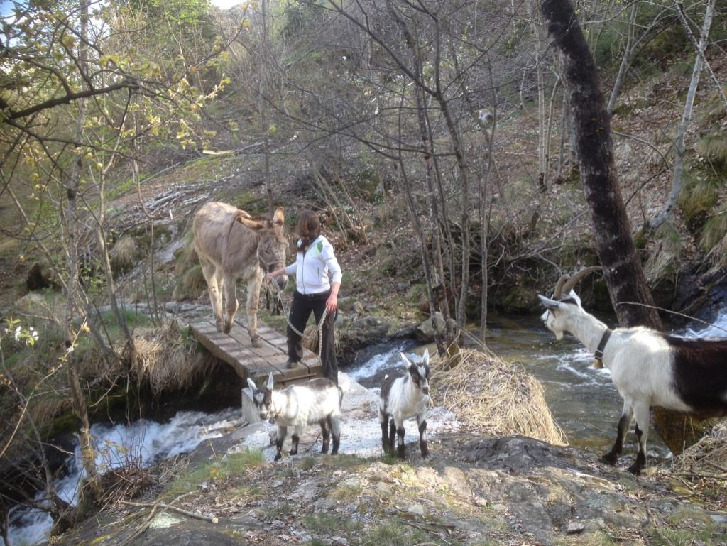 SOMARELLI Unterwegs mit Tieren