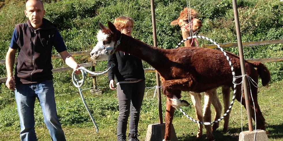 Pfingsten: Von und mit Tieren lernen! > 08.06.-10.06.2019