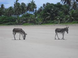 Brazil Tropical natural beach