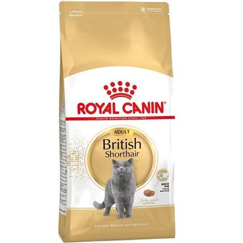 רויאל קנין לחתול בריטי קצר שיער 4 קג