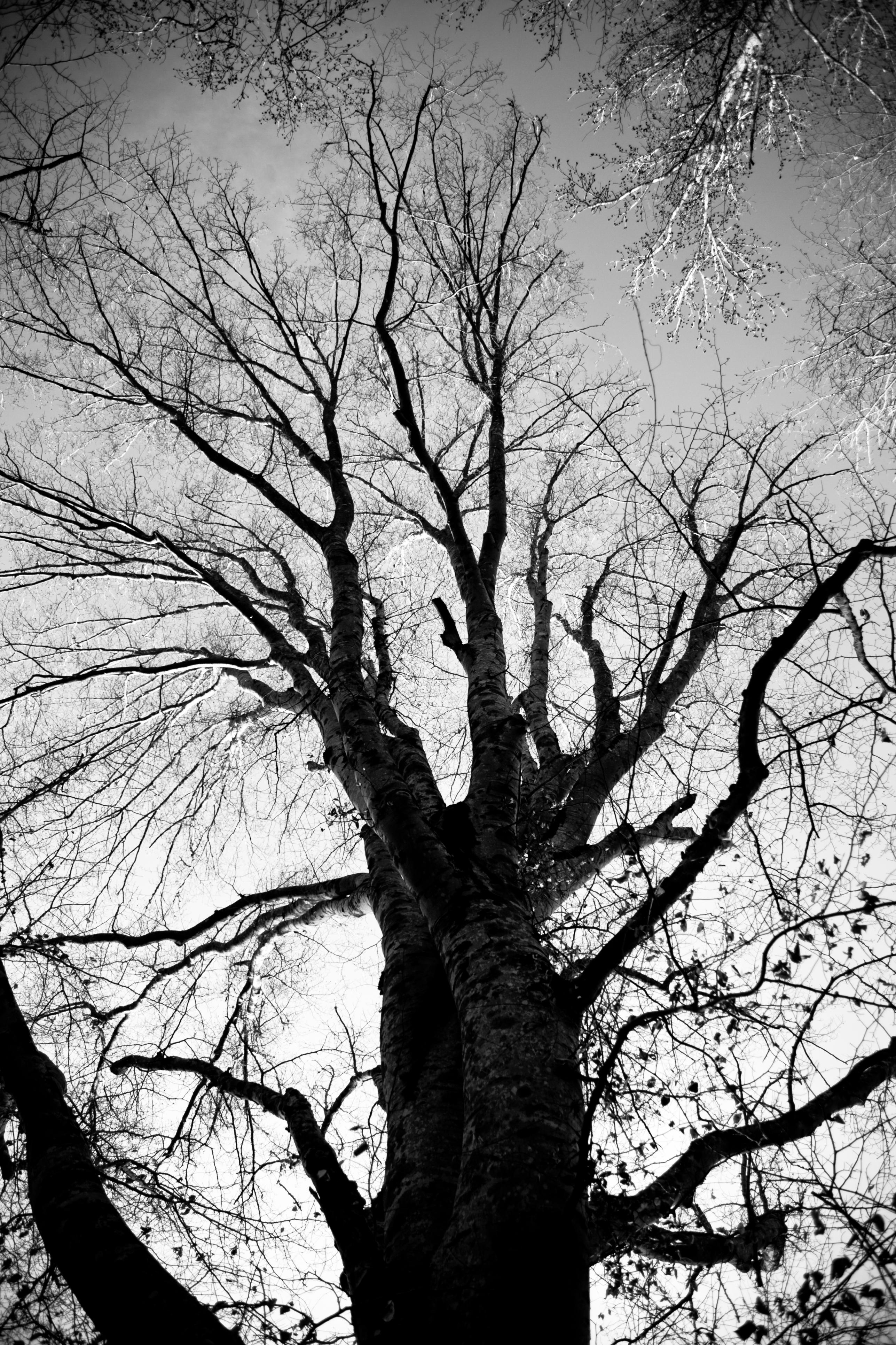 treeoflife-0318