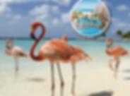 OC_DIVI_ARUBA-01.png