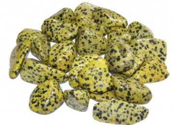 Dalmatiner Jasper gulhvit