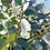 Thumbnail: Eucalyptus pauciflora ssp. debeuzevillei - Jounama Snow Gum