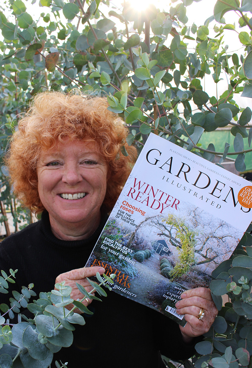 Hilary Collins, Gardens Illustrated, Grafton Nursery, Hardy Eucalyptus