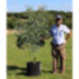 buy eucalyptus pauciflora niphophila mount bogong