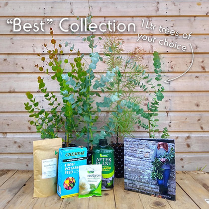 'Best' Cut Foliage Collection - 4 x 1 litre trees