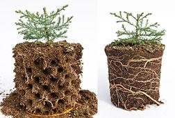 Sequoia-comparison-4-retouched-1024x696.