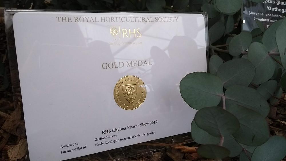 RHS Gold Medal for the Hardy Eucalyptus display by Grafton Nursery