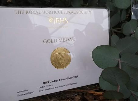 CHELSEA GOLD MEDAL WIN!