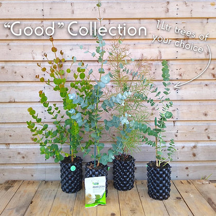 'Good' Cut Foliage Collection - 4 x 1 litre trees