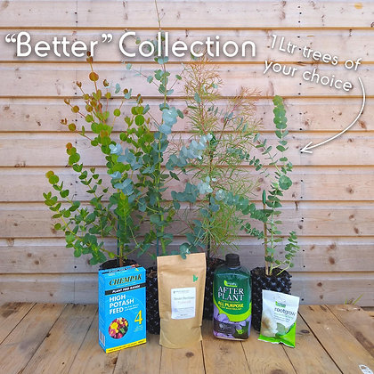 'Better' Cut Foliage Collection - 4 x 1 litre trees